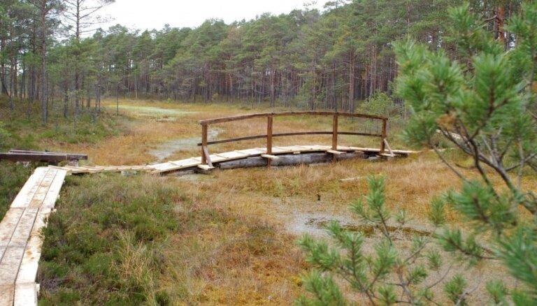 ФОТО. Прогулка вокруг озера Пурэзерс по одной из красивейших природных троп в Латвии