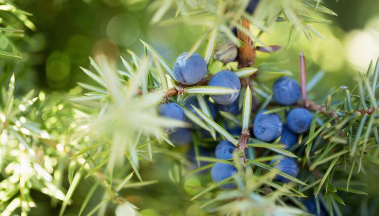 Магические растения, которые защищают от зла: какое подходит именно вам