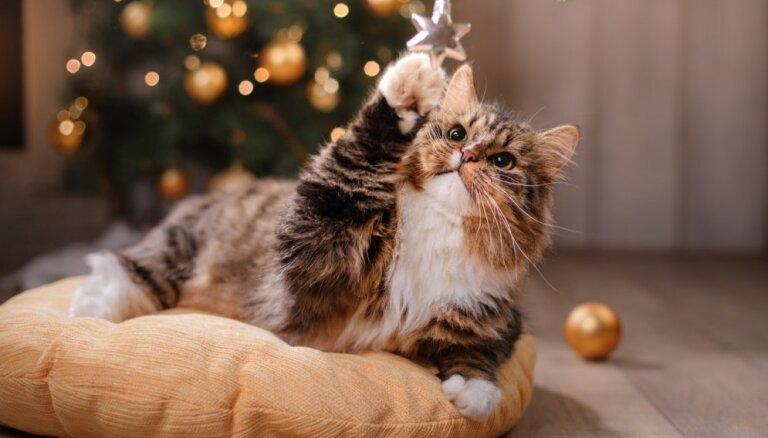 До Рождества сохранится теплая и сырая погода