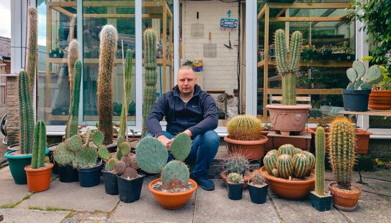 Ar pretenziju uz lielāko kolekciju Latvijā. Kaktusu valdnieks Kārlis Mūsiņš