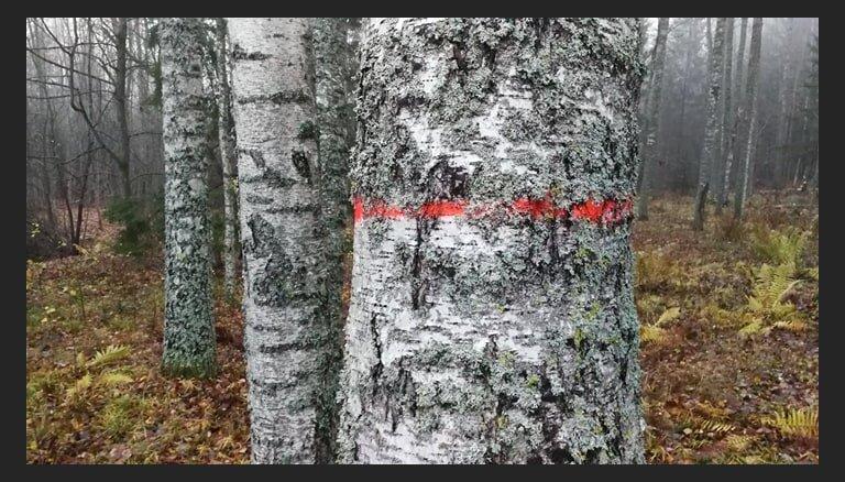 Ērgļu novada opozīcijai ārkārtas sēdē neizdodas apturēt Braku meža ciršanu