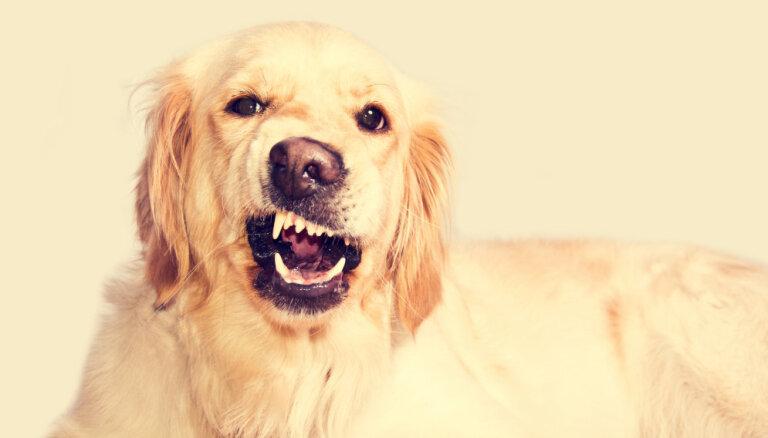 Осторожно, злая собака. Топ-7 признаков, что пес готов наброситься на человека