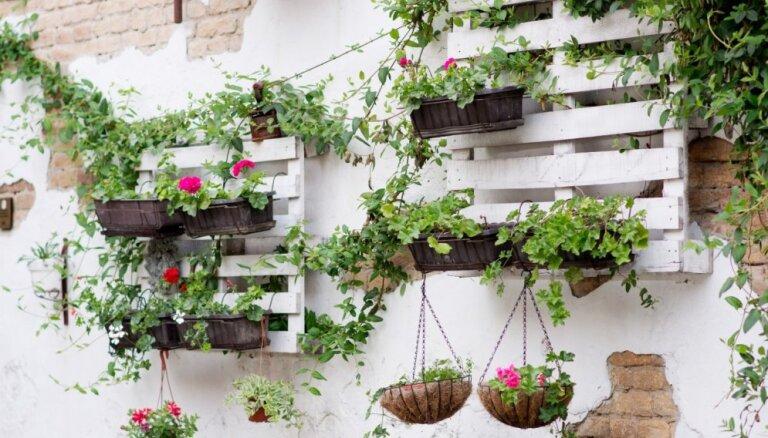 Oriģinālas dobes un instrumentu novietne: idejas koka palešu izmantojumam dārzā