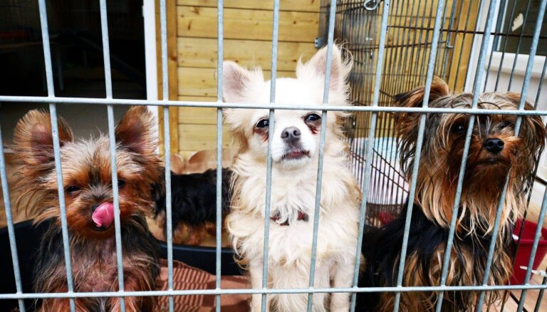 58 antisanitāros apstākļos turēto suņu saimniecei piespriež maksimālo naudas sodu