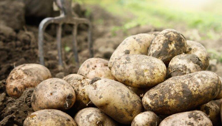 Jūnijā Latvijā bija Baltijā dārgākie kartupeļi un bietes