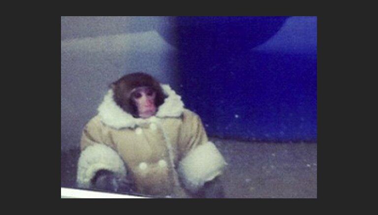 Суд отказался возвращать обезьяну в пальто хозяйке