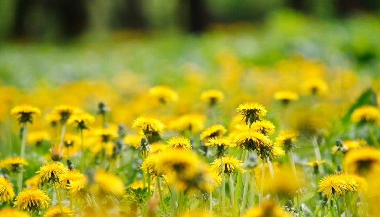 Jūlijā notiks piektais meditācijas un mūzikas festivāls 'Gara Vasara'