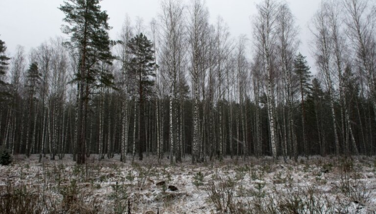 Ceturtdien būs vēss, vietām īslaicīgi snigs slapjš sniegs
