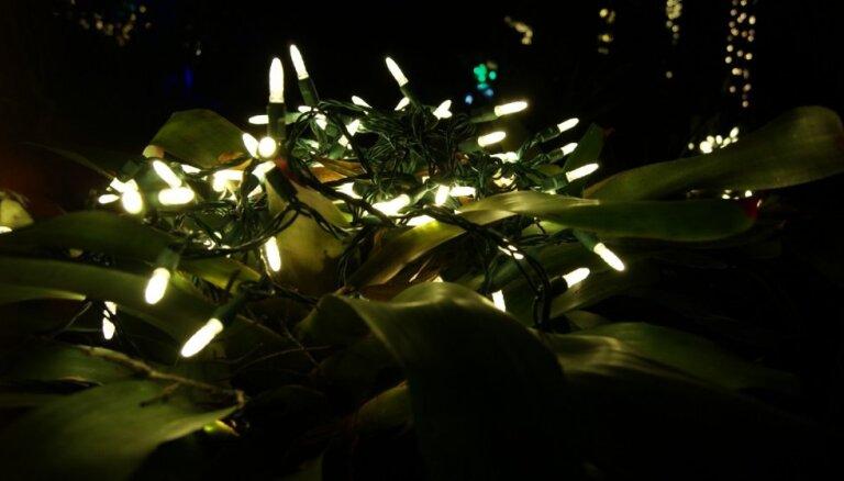 Izpušķoti augi Ziemassvētku noskaņās: jābūt piesardzīgam ar lampiņu virtenēm