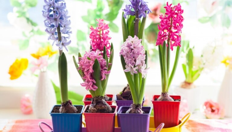 Ieteikumi, lai mājā allaž valdītu patīkams aromāts