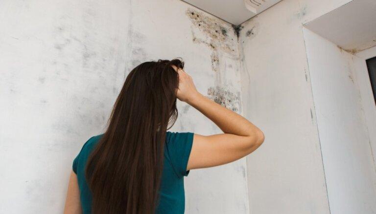 Pelējums uz sienas un virsmām: padomi, kā no tā atbrīvoties
