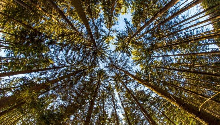 'Latvijas valsts meži' pamatkapitāls palielināts līdz 355,7 milj. eiro