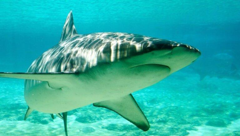 ВИДЕО: Как тигровая акула с акулой-молотом боролась