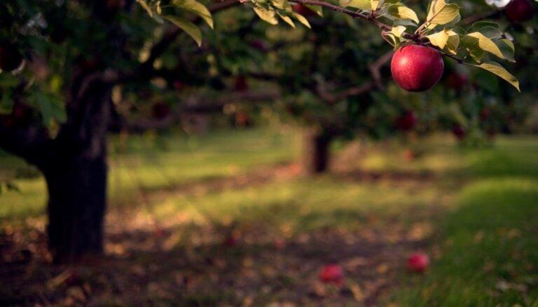 Latvijai raksturīgo augļu un ogu eksporta apmērs valstī pērn audzis par 11%, lēš ZM