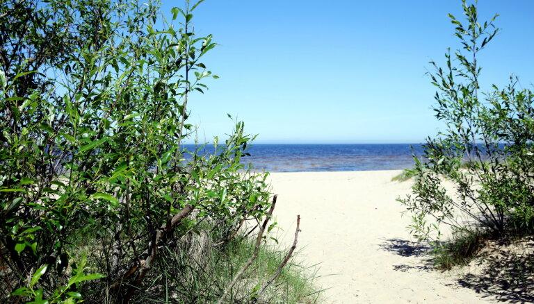 В море у берегов Латвии появились опасные сине-зеленые водоросли