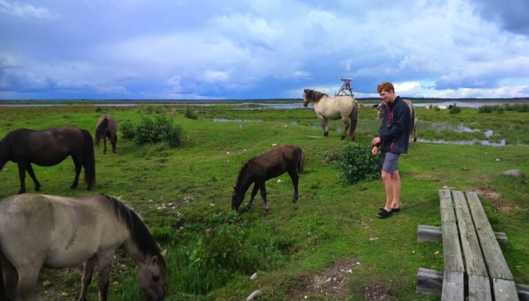 Vienas dienas maršruts gar Kurzemes jūrmalu: draudzīgi dzīvnieki, brīnišķīgi skati un dabas takas