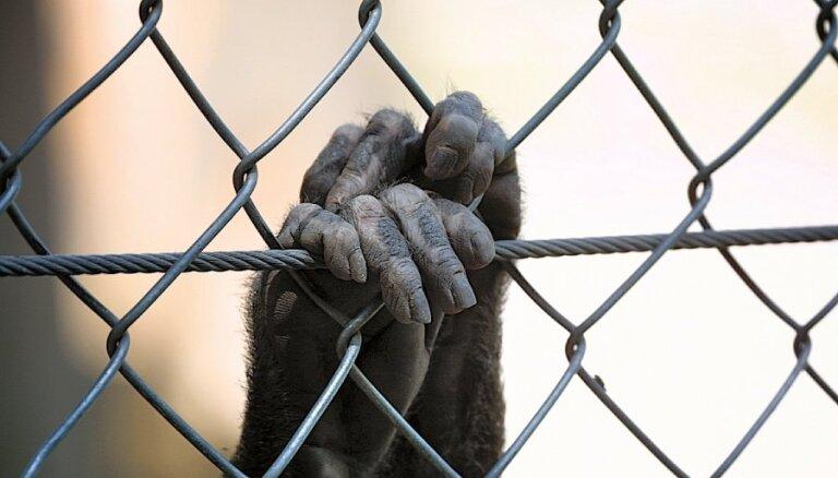 Рижский зоопарк ищет нового главу: ради этой должности депутат Сейма может сложить мандат