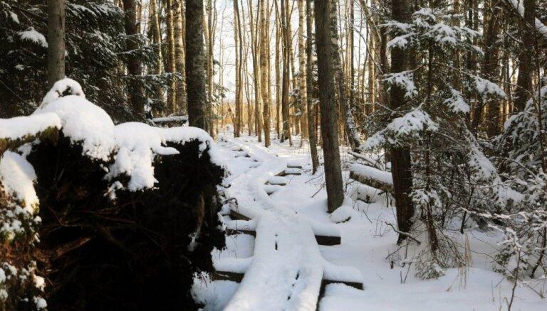 Foto: Mierpilna pastaiga pa Kaņiera pilskalna dabas taku