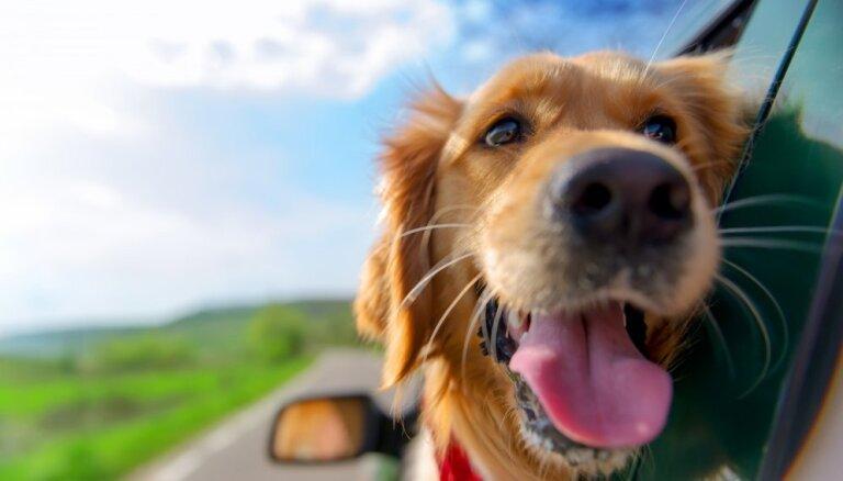 Как правильно перевозить животное в машине
