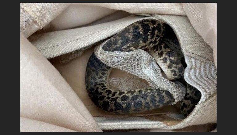 No Austrālijas atvestā čemodānā sieviete Lielbritānijā atrod čūsku
