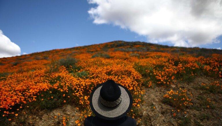 """ФОТО. В Калифорнии началось """"суперцветение"""" пустынь и гор"""