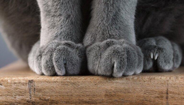 25 самых ужасных котов в мире