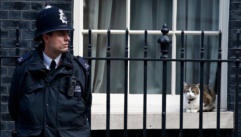 Первая задача премьера Британии - подружиться с котом Ларри