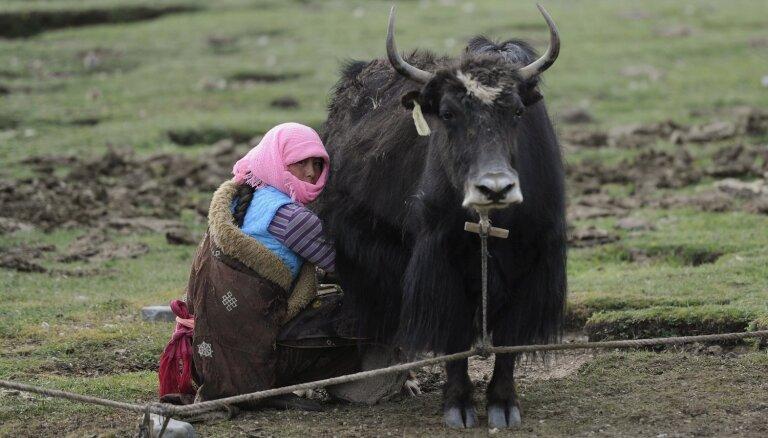 Indijā bada nāvē miruši vismaz 300 ielejā iesprostoti jaki