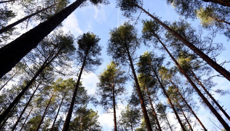 Государство выделит лесной отрасли сотни тысяч евро
