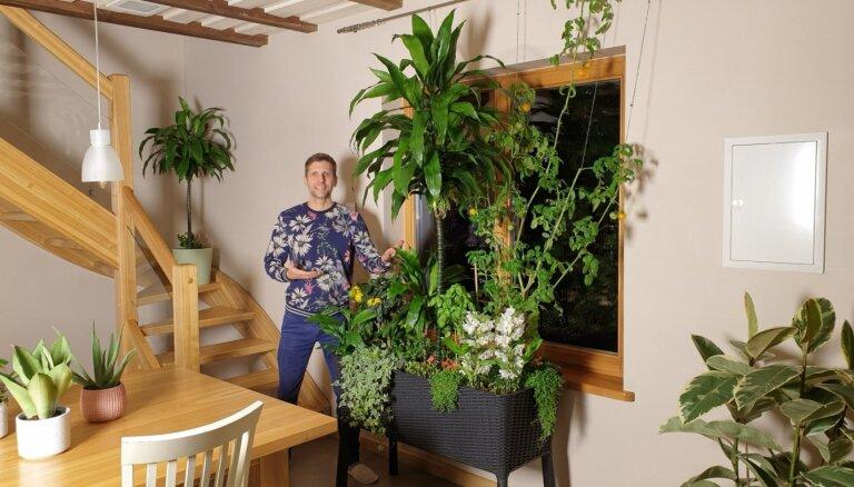 Советы специалиста: как самостоятельно создать идеальную почву для комнатных растений