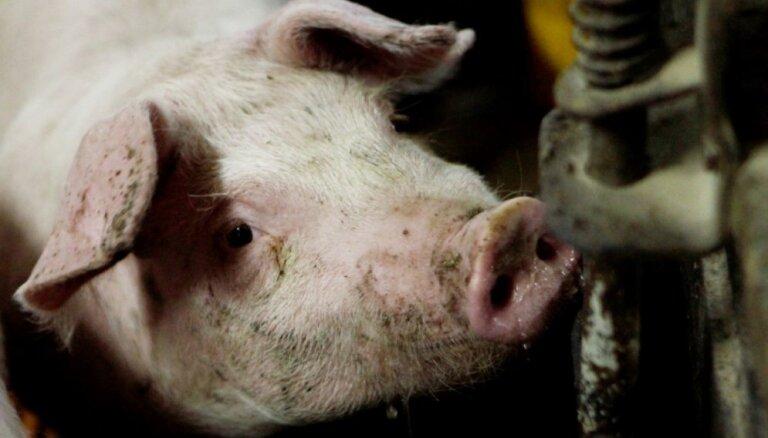Šaurība un karstums: EP mudina labāk gādāt par dzīvniekiem transportēšanas laikā