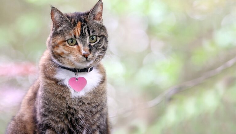 О чем не стоит забывать, если у вас дома есть кошка