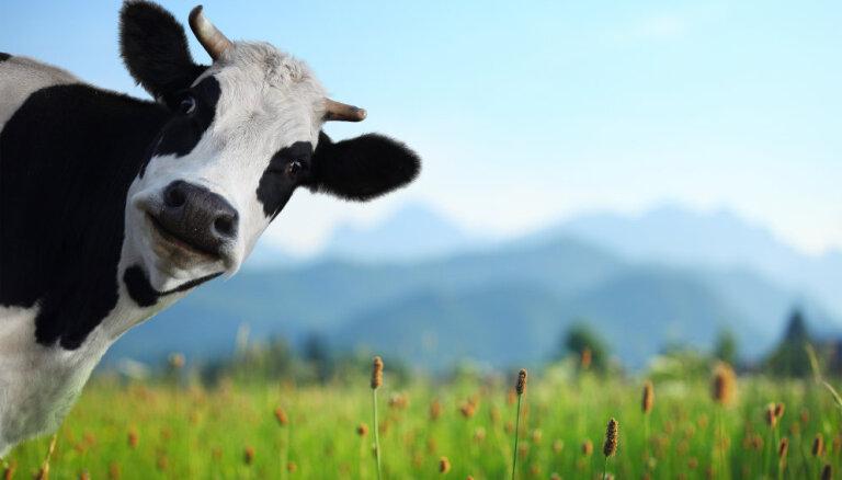 Эхо эмбарго: молочники могут рассчитывать на 13 млн. евро