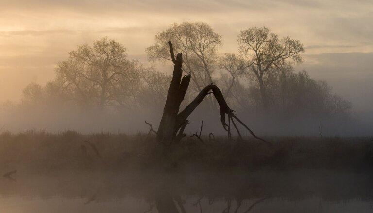 Ученые исследовали затонувший лес каменного века неподалеку от Клайпеды