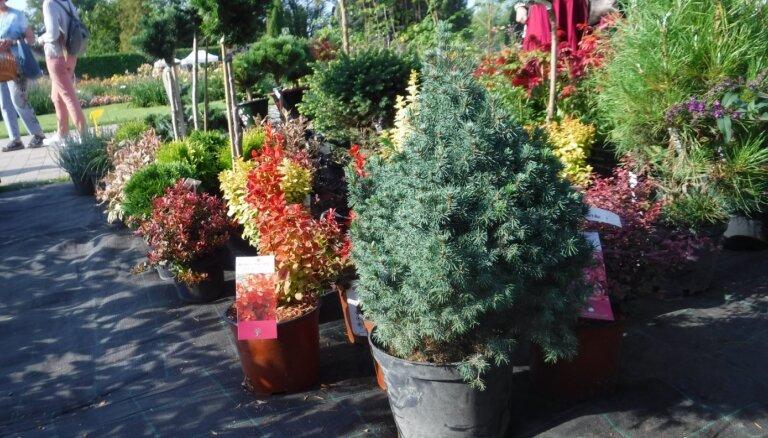 12. septembrī Nacionālajā botāniskajā dārzā notiks stādu gadatirgus