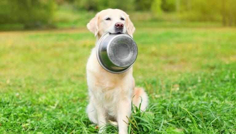 Veterinārārsti: 'Dogo' un 'Ņau-Ņau' barības izņemšana no tirgus ir likumsakarīgs rezultāts