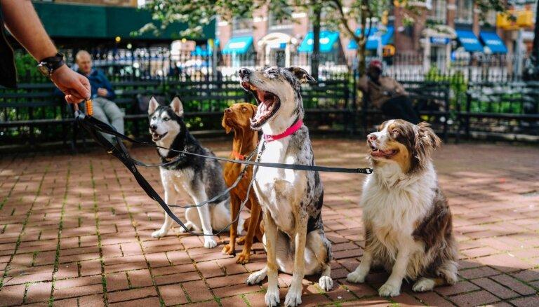 Sešas iemaņas, kas jāapgūst pilsētas sunim