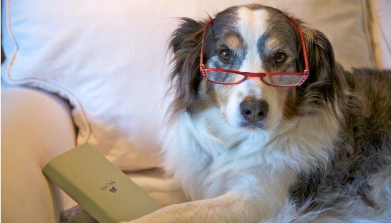 И жили они долго и счастливо: Топ-13 пород собак-долгожителей