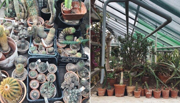 LU Botāniskajā dārzā pārvērtības piedzīvo sukulentu siltumnīca