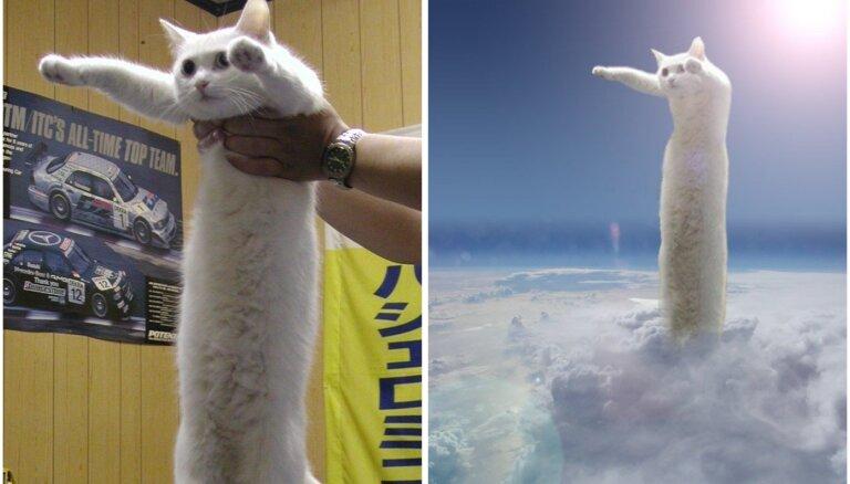 18 gadu vecumā mirusi interneta mēmju zvaigzne – Garais kaķis