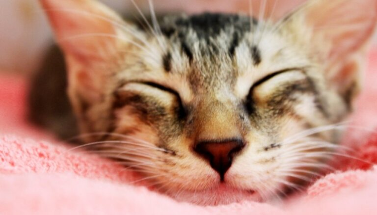 10 роковых ошибок начинающих котовладельцев