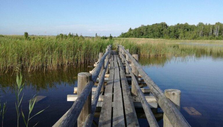 Foto: Pastaiga pa īso, bet unikālo Kaņiera ezera niedru taku