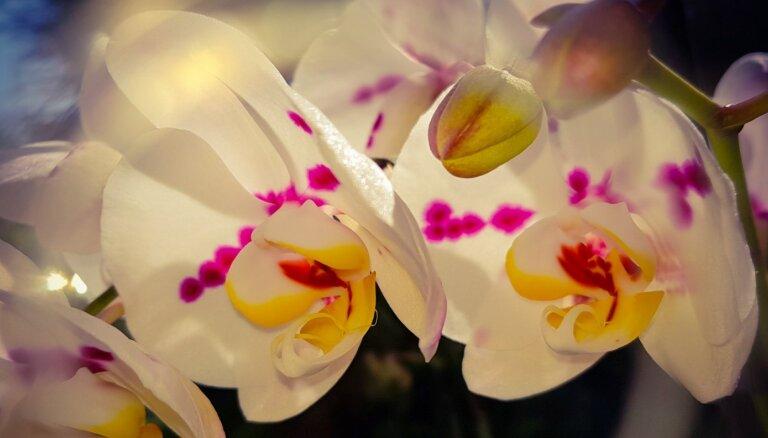No pārstādīšanas līdz gaisa mitrumam – zelta padomi orhideju kopšanai