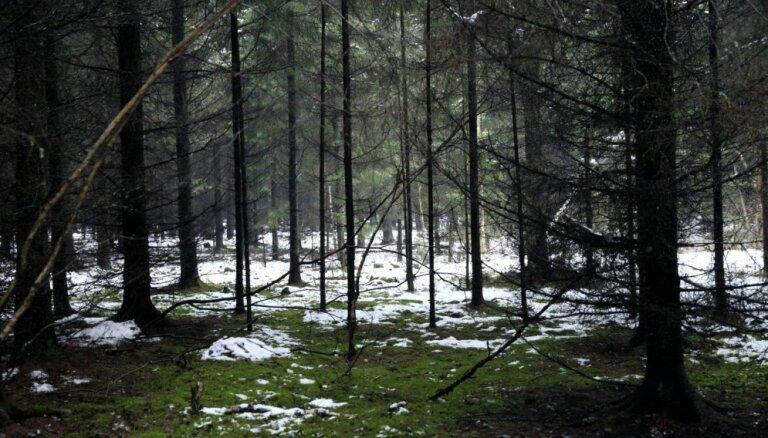 Вандалы ежегодно портят 20 мест для отдыха в государственных лесах Латвии