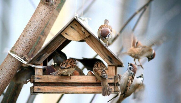 Kafejnīca mazajiem draugiem: septiņas radošas idejas paštaisītām putnu barotavām