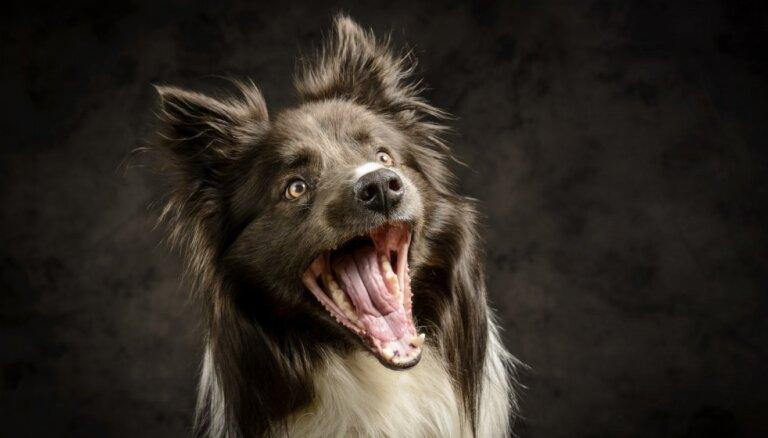 Nemūc no rūcoša suņa. Kinologa Ivara Lielpētera ieteikumi bērna drošībai