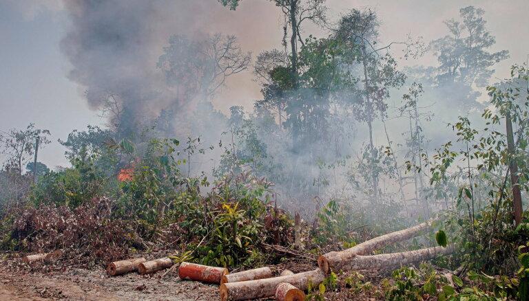 Вырубка лесов в Амазонии увеличилась почти вдвое