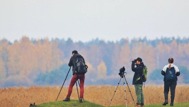 Putnu vērotājus aicina uz sacensībām 'Rīgas putnu cīņa 2020'