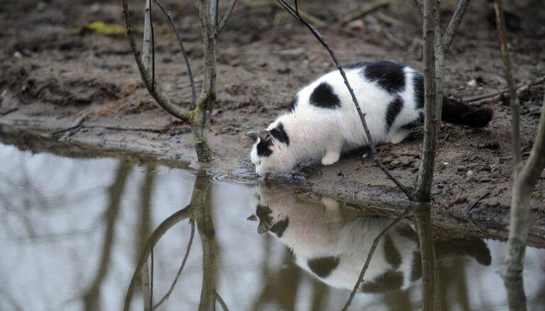Klaiņojošos dzīvniekus Jelgavā izķers 'Bauskas veterinārais centrs' un 'Mežavairogi'
