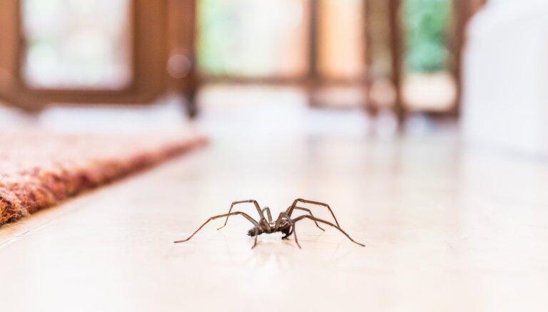 Kāpēc zirnekļi iemīļojuši mājokļus, un kā tikt galā ar citiem nevēlamiem viesiem